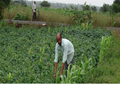 Factors worth considering while establishing Organic Farm