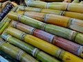 Pokkah Beong: A new major threat for the Sugarcane Farmers