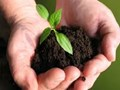 Know Everything about Biofertilisers; From Types to the Application Process