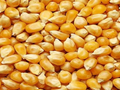 Soybean Exports from USA Increases; Corn Exports Significantly Down