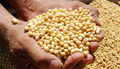 Soybean Crop of Brazil estimated lower versus earlier expectations
