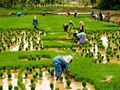 Karnataka plans to expand agricultural lending in the cooperative sector