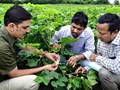 Farmers Panic as Pink Bollworm Attack on CottonReaches Alarming Levels in Punjab
