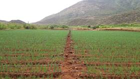 Consider these factors, for better paddy seeding