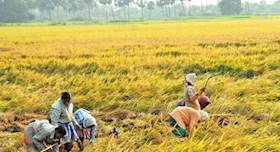 For best returns Best harvesting operations in Paddy