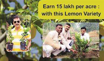 Earn 15 lakh per acre : with this Lemon Variety