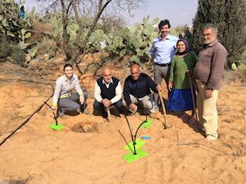 Underground Irrigation Tech Helps Tunisian Farmers Counter Drought