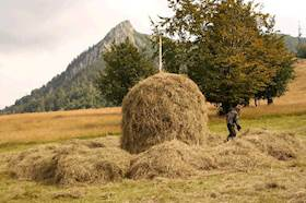 A Complete Guide To Quality Hay Making