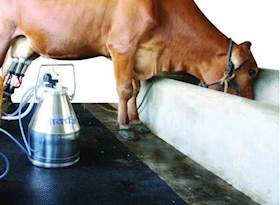 Milk Production & Food Safety