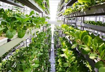 ICAR, Amity University organize National Workshop on Vertical Farming