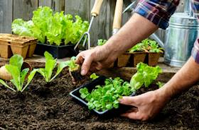 Home gardening for beginners