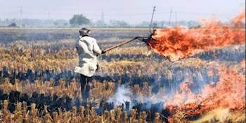 70% drop in stubble fires likely this season in Punjab