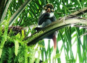 Crop Riding Monkeys – Scientific and environment friendly approach is needed