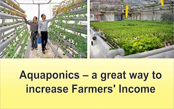 Aquaponics – a great way to increase Farmers' Income