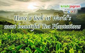 Have a look at World's most beautiful Tea Plantations