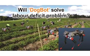 Will 'DogBot' solve labour deficit problem?
