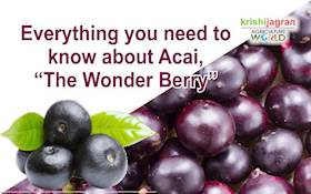 "Everything you need to know about Açai, ""The Wonder Berry"""