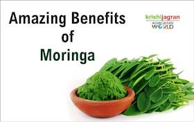 Amazing Benefits of Moringa