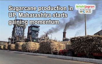 Sugarcane production in UP, Maharashtra starts gaining momentum