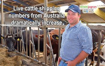 Live cattle shipping numbers from Australia dramatically increase