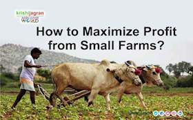 How to Maximize Profit from Small Farms?