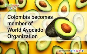 Colombia becomes member of World Avocado Organization
