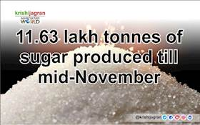 11.63 lakh tonnes of sugar produced till mid-November