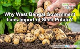 Why West Bengal Government bans Import of Seed Potato?