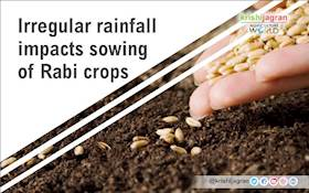 Irregular rainfall impacts sowing of Rabi crops