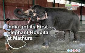 India got its First Elephant Hospital at Mathura