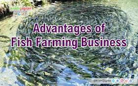 Advantages of Fish Farming Business