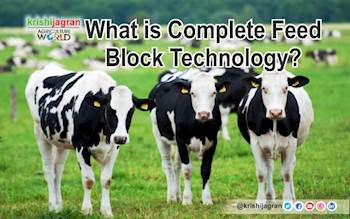 What is Complete Feed Block Technology and how is it helping dairy farmers?