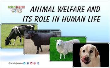 Animal Welfare and Its Role in Human Life