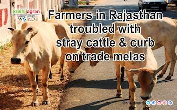 Farmers in Rajasthan troubled with stray cattle & curb on trade melas