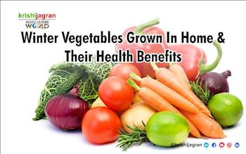 Winter Vegetables Grown In Home & Their Health Benefits
