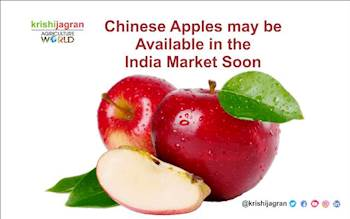 Chinese Apples may be available in the India Market Soon