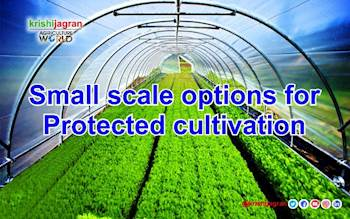 Small Scale options for Protected Cultivation