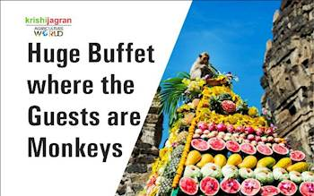 Huge Buffet where the Guests are Monkeys