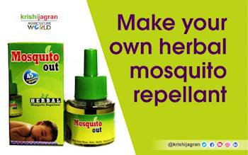 Make your own Herbal Mosquito Repellant