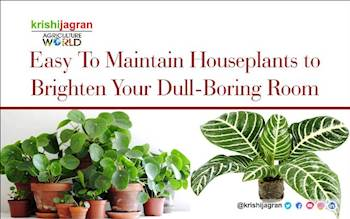Easy To Maintain Houseplants to Brighten Your Dull-Boring Room