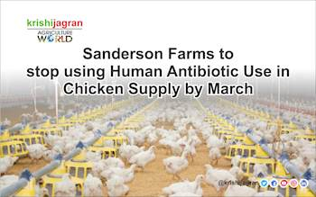 Poultry Giant 'Sanderson Farms' to stop using Human Antibiotic Use in Chicken Supply