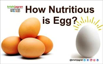 How Nutritious is Egg?