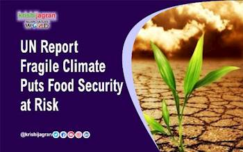 UN Report: Fragile Climate Puts Food Security at Risk