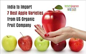 India to Import 7 Best Apple Varieties from US Organic Fruit Company