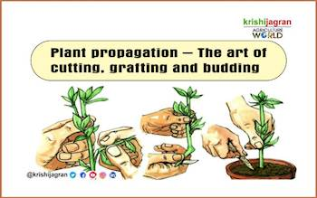 Plant propagation – The art of cutting, grafting and budding
