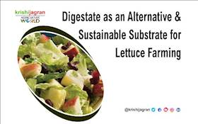 Digestate as an Alternative & Sustainable Substrate for Lettuce Farming