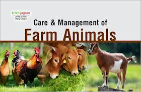 Important Livestock Management Tips for Farmers