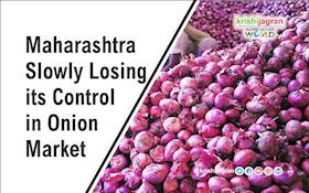 Maharashtra Slowly Losing its Control in Onion Market