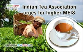 Indian Tea Association urges for higher MEIS