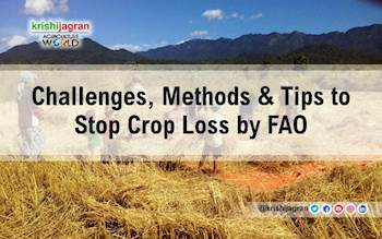 Challenges, Methods & Tips to Stop Crop Loss by FAO